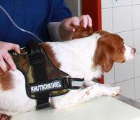 Tierklinik Börnsen informiert: Gefährliche Reiseerkrankungen des Hundes