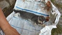 Deutsches Tierschutzbüro: Gerichtsurteil: Tötung ungewollter Katzenbabys ist eine Straftat