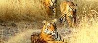 Wenn die Wildnis ruft: Enchanting-Travels Reiseinspirationen für faszinierende Tierwelt-Momente