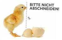 Schnabelkürzen bei Legehennen wird praktisch bundesweit abgeschafft - Auswirkungen auf andere Länder - 65 Mio. Hennen betroffen