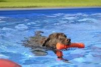 Pools für alle Felle und starke Pfoten