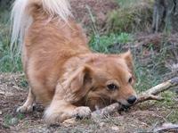 Deutsche Tierschutzbüro e.V. warnt: Stöckchenspiel mit dem Hund kann tödlich enden