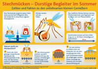 Stechmücken - Durstige Begleiter im Sommer