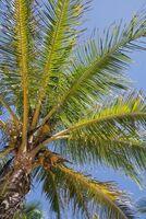 Palmöl: Das Allround-Talent