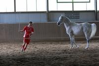 Teambuilding Seminar für  Fußballer, Handballer,Teamsportler mit Pferden. Was bringt es? Was ist für den nachhaltigen  Erfolg notwendig?