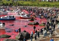 Kreufahrtunternehmen ignorieren Gefahren durch Walfang auf den Färöer-Inseln