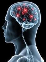 """showimage Mega-Event """"Gehirn-Wissen"""" am 13. Dez. 2014 in Bonn - bereits über 850 Tickets sind verkauft"""