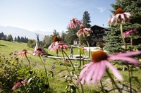 Goldener Herbst lockt zum Wanderurlaub in Österreich