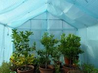 Pflanzenschutz im Winter