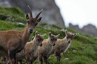 Natur beobachten beim Wandern in Tirol
