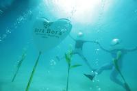 """Neu: """"Bora Bora Underwater Wedding"""" - Ja-Wort unter der Oberfläche der schönsten Lagune der Welt"""
