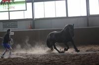 Führungstraining für Fußballer mit Pferden. Neue Perspektive für die Nachwuchssportler