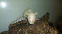 Deutsches Tierschutzbüro e.V. ist erschüttert über Tierquälerei in Nürnberger Zoofachhandel - Strafanzeige erstattet
