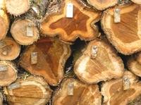 Greenpeace deckt Einfuhr von illegalem Tropenholz auf