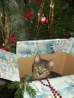 Deutscher Tierhilfe Verband: Zu Weihnachten lieber ein Stofftier