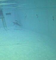 Tsunami im Tiergarten Nürnberg - Delfinmutter mit Psychopharmaka zugepumpt