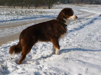 Vorsicht beim Winterspaziergang: Streusalz für Hundepfoten schmerzhaft
