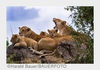 Fotosafari auf höchstem Niveau: Exklusive Wildlife-Fotoreise mit SIGMA durch Kenia
