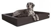 Welche Hundebetten sind eigentlich für grosse Hunde geeignet?