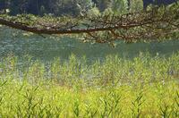 """""""Ewige Ruhe im See?"""" - Expertengespräch der ERGO Direkt Versicherungen"""