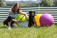Lehrvideos für den sicheren Umgang mit Hunden