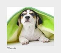 Welche Hundebetten werden gut akzeptiert?