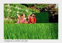 Frühjahrskur für einen gesunden, tiefgrünen Rasen