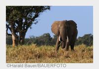 Jetzt abstimmen und gewinnen: Kür des SIGMA Safaribloggers für exklusive Wildlife-Fotoreise