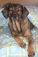 Gefahren der Grippewelle für Haustiere