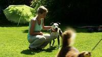 Wege zur Harmonie zwischen Mensch und Hund - Neuerscheinung bei LANA-Film®