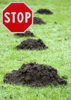 Maulwurfschutz mit Garantie - schnell und unkompliziert zu einem hügelfreien Garten.