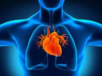 Länger leben mit sauberen Arterien