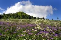Rhöner Blütenmeer verzaubert Besucher