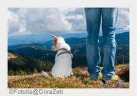 Wandern mit Hund 2015: Hundefreundliche Routen & Gastgeber