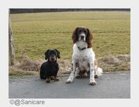 Biest beißt Hund: Steigende Temperaturen locken Zecken hervor