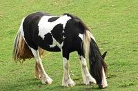 Horsemanship-Bodenarbeit