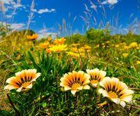 Traumhafter Wellness Sommerurlaub im Thüringer Wald