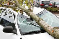 Pflichten des Versicherungsnehmers bei Sturmschäden
