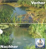 Algen? Algenfreie Teiche, Badeteiche, Biotope, Seen