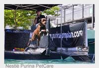 Hunde, die abheben: Dog Diving und Disc Dog erobern Deutschland im Flug