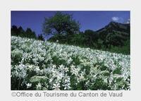 showimage Reise-News aus dem Genferseegebiet
