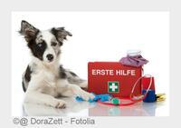 Kastration beim Hund: Tierarzt in Neckarsulm informiert