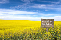 Die gelbe Jahreszeit ist angebrochen - Auf Deutschlands Rapsfeldern wächst jetzt Margarine!