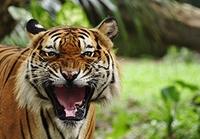 Ein zahnloser Tiger mit Blackout: IT-Sicherheit im Energiesektor
