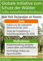 UN Aktionsplan: Globale Initiative zum Schutz der Wälder