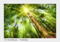 Ohne Licht kein Leben: Photonentherapie in Stuttgart