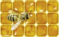 Rettet Die Bienen Kritik