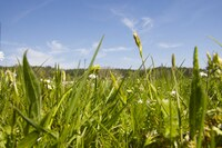 Schwab Rollrasen: Gartenpflege-Tipps für die Sommermonate