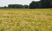 Anhaltende Trockenheit führt zu Sorgenfalten bei Landwirten