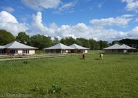 Mit-Pferden-reisen.de empfiehlt: Urlaub mit Pferd und Hund auf der AlAssil Oase
